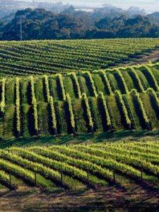 pyrenees- wine region